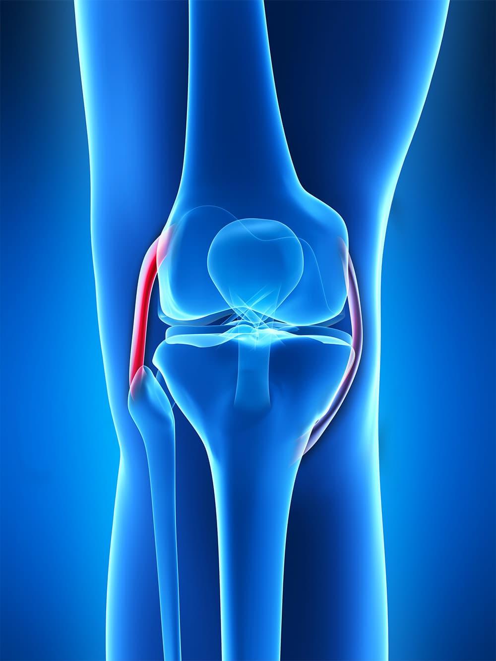 Schema descriptif du ligament collatéral latéral
